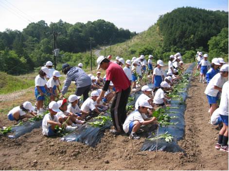 美咲中央小の生徒とさつまいもの苗の植え付け、遠景は美咲の森
