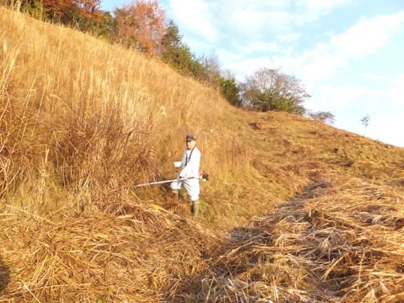 暴走葦の刈り込み、5年保育管理へ